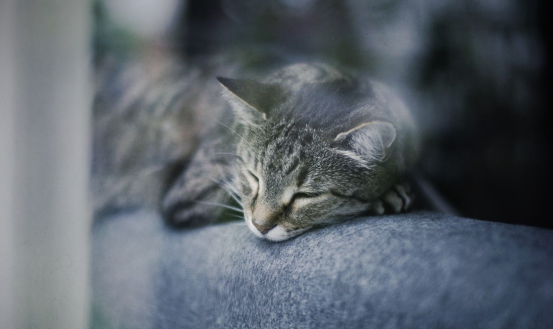 seasonal-affective-disorder-in-pets